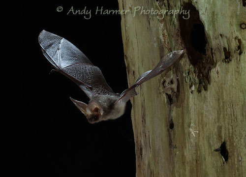 Bat Surveys from Leigh Ecology